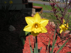 Spring_happenings_004